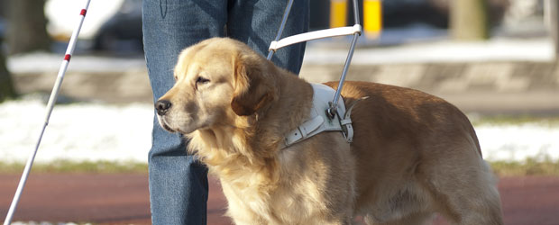 Image of an assistance dog
